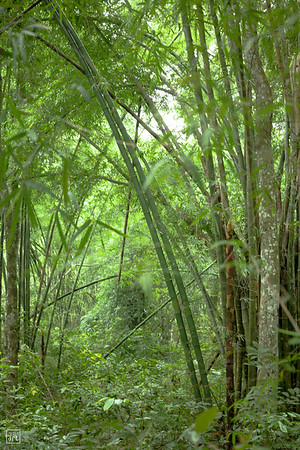 Sylhet | Lawachara rain forest