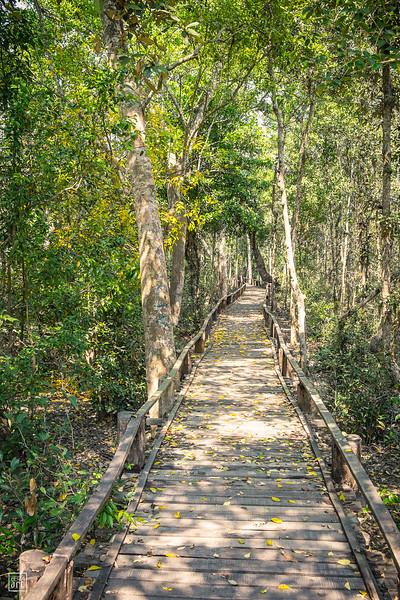 Sundarbans   The world's largest mangrove forest
