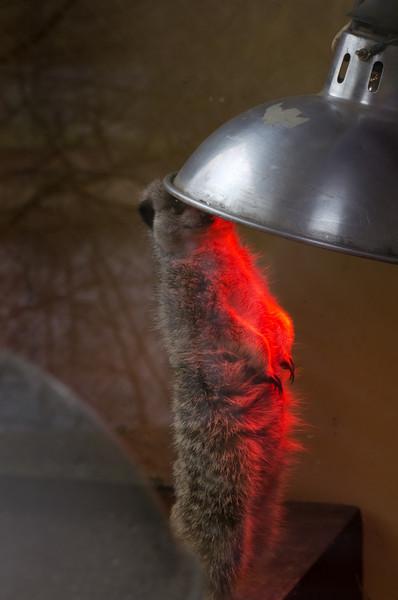 Hogging the Heatlight