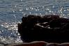 Cormorant at Otter Cliffs