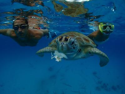 Barbados 2013-14 Sharker HD