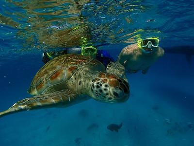Barbados 3 2013-14 Sharker
