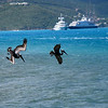 The pelicans practice synchronized fishing off Virgin Gorda.