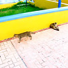 Cats next to the fish market in Speightstown, Barbados