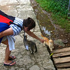Cissa attracts cats on Iles des Saintes, French West Indies