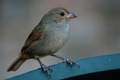 Finch02