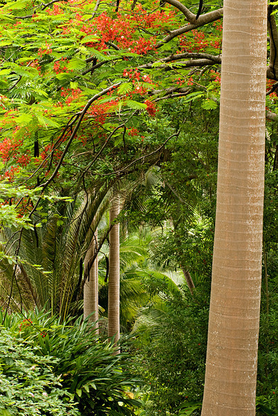 Flower Forest Palm Trunks