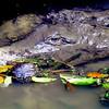 Barbados Wildlife Reserve - Camouflages Alligator