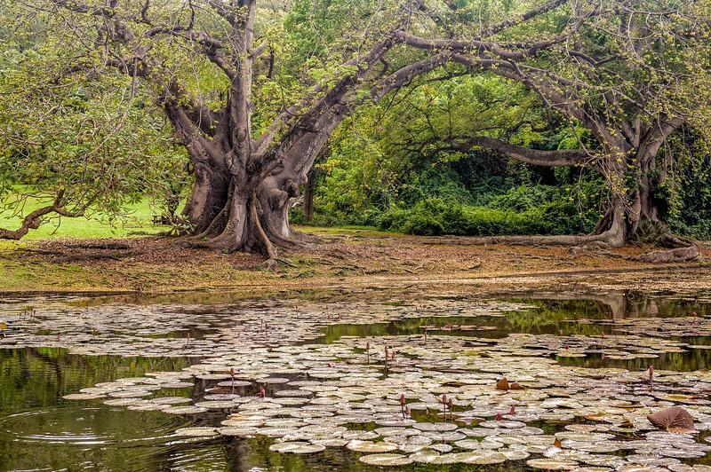 Codrington College Park, Barbados - Trees