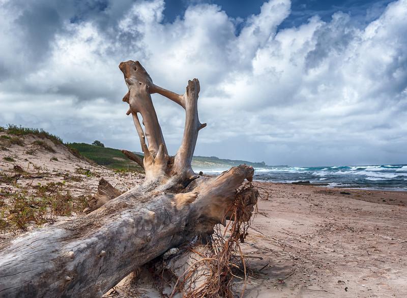 Landscape Barbados