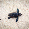 Turtles on Dover Beach