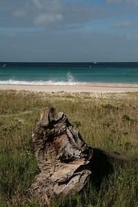 Driftwood, Barbados