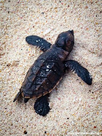 Turtles on Dover Beach