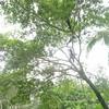 IMG_5151