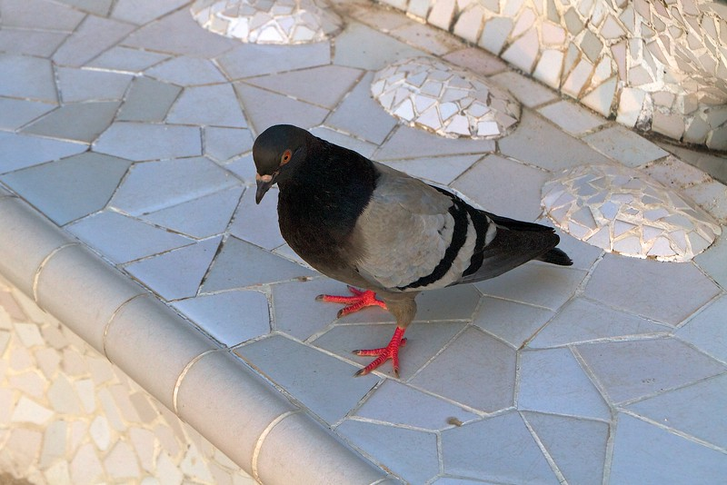 A pigeon on the bench on the plaza