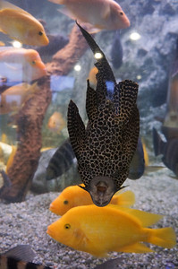 The aquarium in Barcelona.