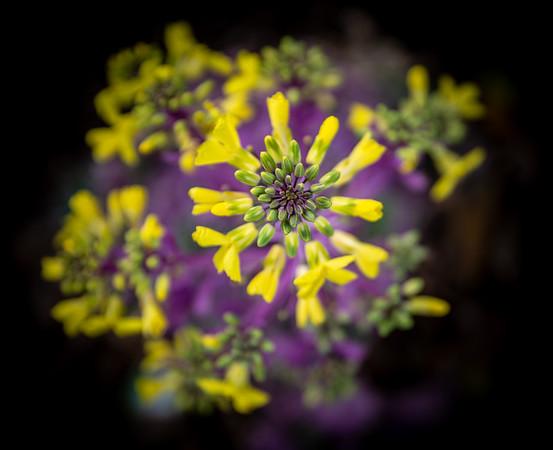 Yellow Flower, Barcelona