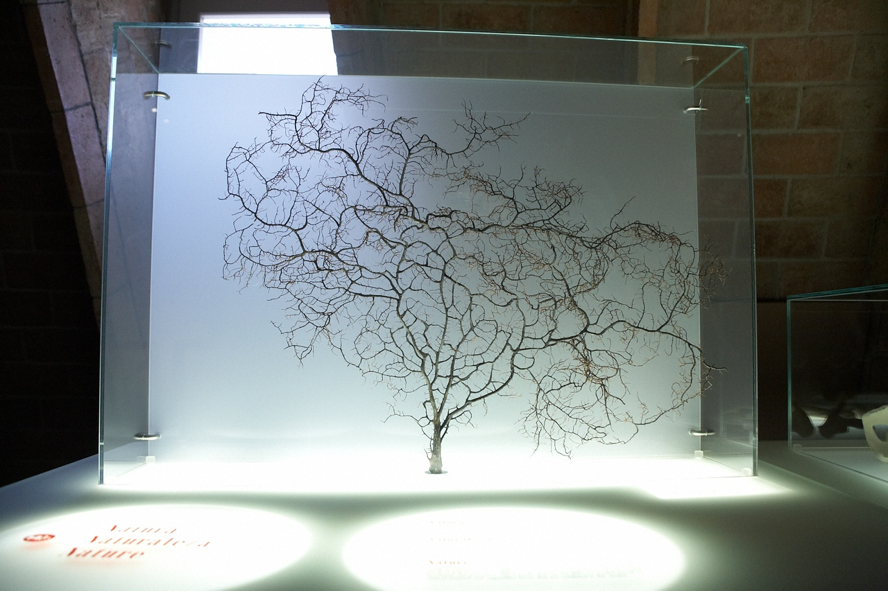 This model of a tree is an example of fractals. Gaudi drew lots of inspiration from designs found in nature.