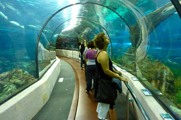 Her får ein fisk og hei ganske nær...