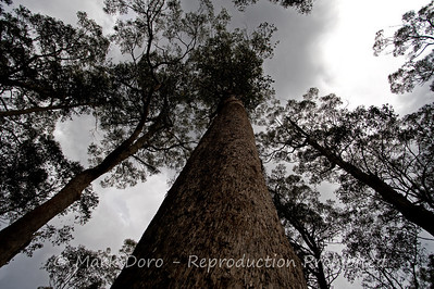 Giants, Barrington Tops, NSW