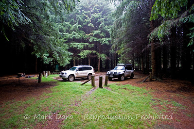 Forest glen, Barrington Tops, NSW