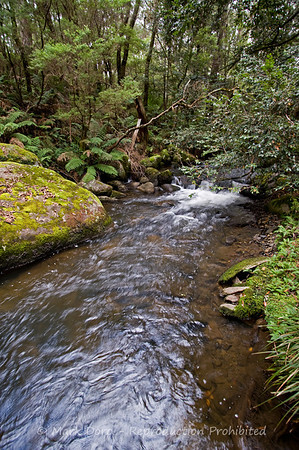 Dilgry River, Barrington Tops, NSW