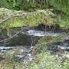 this is Muir Creek