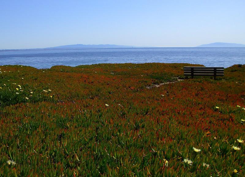 These orange-tipped ice plant succulents were cool - Santa Cruz.