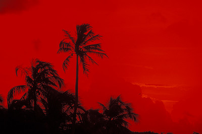 © Joseph Dougherty.  All rights reserved.   Deep red sky with coconut palms in silouette;   Anthony's Key, Roatan, Bay Islands, Honduras.