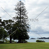 Tree standing tall and view on Waitangi Treaty Grounds in Bay of Islands, New Zealand.