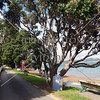 Bayside street on Russell island in Bay of Islands, New Zealand.