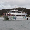 Dolphin watching tour boat cruising the Bay of Islands, New Zealand.