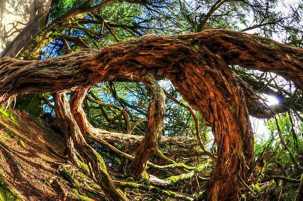 A tree at Marin Headlands, fisheye lens.