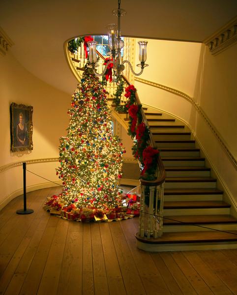Philadelphia Hall Christmas Tree, a wider view