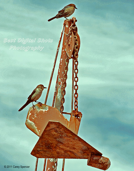 Birds perched atop mast and anchor of fishing boat