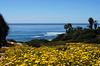 Springtime flowers frame the view along Sunset Cliffs in San Diego, California.