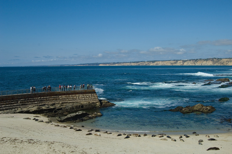 Seals and Sea Lions dozing on the beach at The Children's Pool in La Jolla, California.