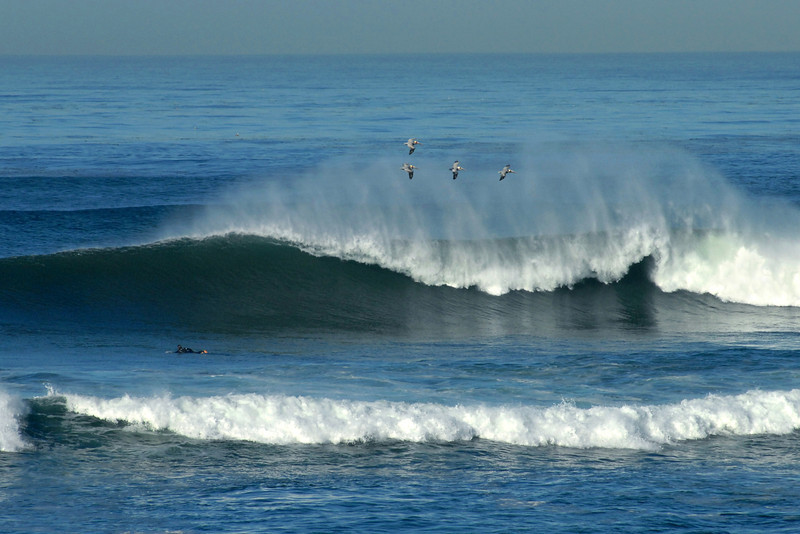 Waves and Pelicans on a great winter day in San Diego.
