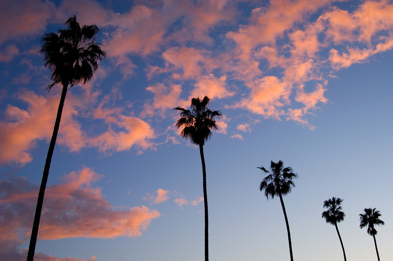 Palms at sunset in Ocean Beach.