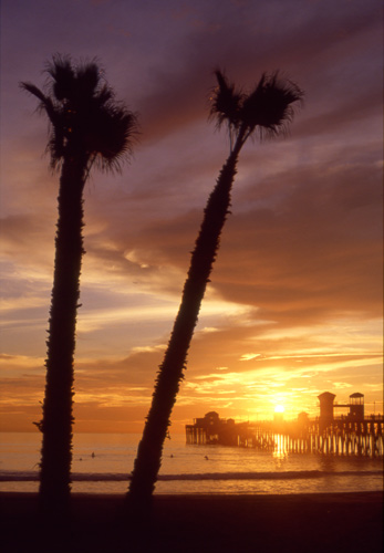 Oceanside pier is framed by palms just before sunset.