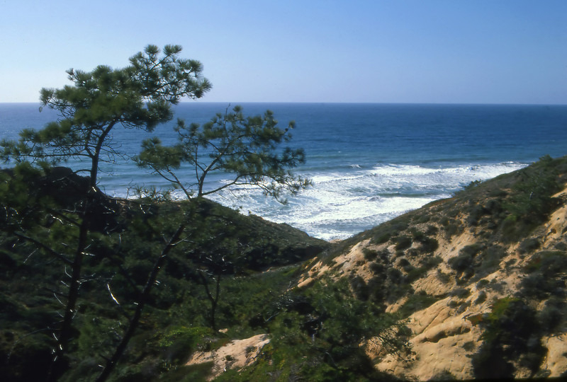 View of the Pacific from one of the trails at Torrey Pines State Reserve, in San Diego, California.
