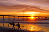 Young surfers leaving the water at sunset by the Ocean Beach pier.