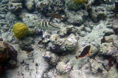 Groupers and stoplight parrotfish