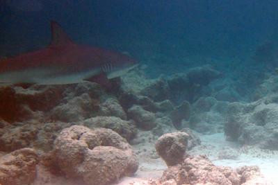 Saw a shark in 5 feet deep water 10 feet from shore