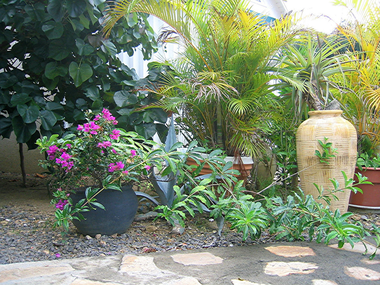 This is our garden at Villa Les Cailles in Anse des Cayes. (geotagged)