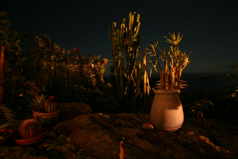 Our plant life in the moonlight at Ker Roch Glaz, in a 30-second exposure.