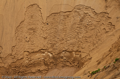 "Sand pattern looking a bit like ""The Brain"" at Uluru - Rainbow Beach, Queensland, Australia; June 2010"
