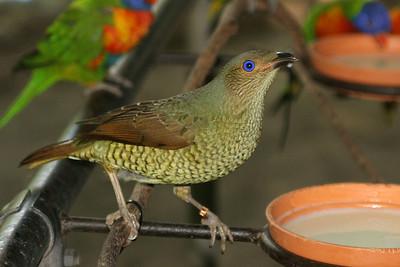 Beautiful Tropical North Queensland, including Cairns, Spring 2008. Photos by Des Thureson:  http://disci.smugmug.com
