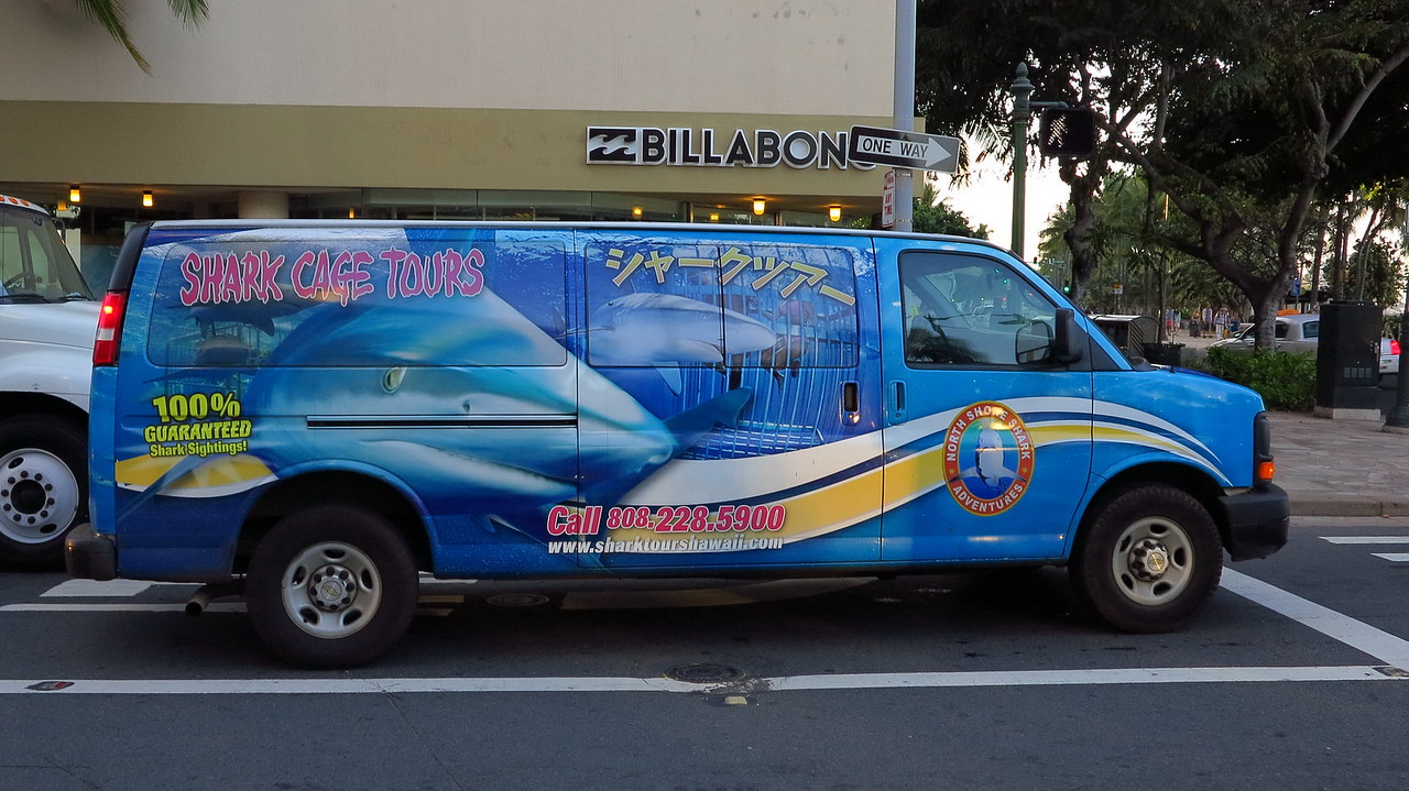 Shark Cage Tours