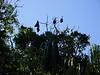 Der RBG leidet unter einer Fledermausplage. Die Viecher hängen da in jedem Baum rum.